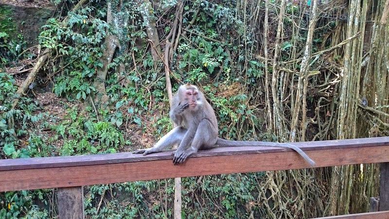 monkey forest ubud - Monkey Forest, Ubud