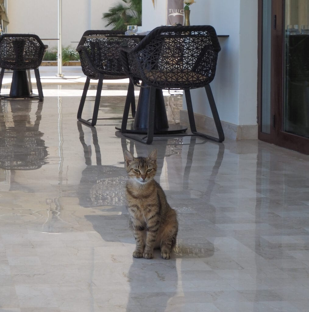 FS Tunis 75 1014x1024 - REVIEW - Four Seasons Tunis : Premier Room