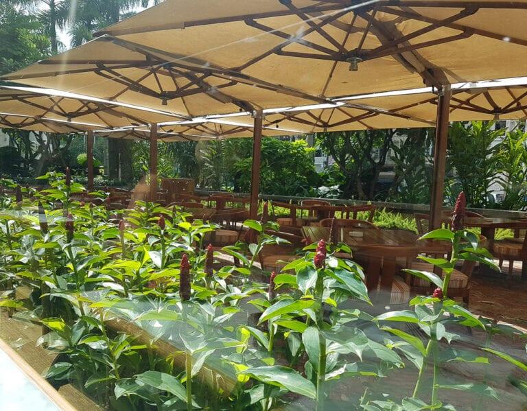 PH Saigon 40 768x599 - REVIEW - Park Hyatt Saigon : Deluxe King (w. Pool Access)