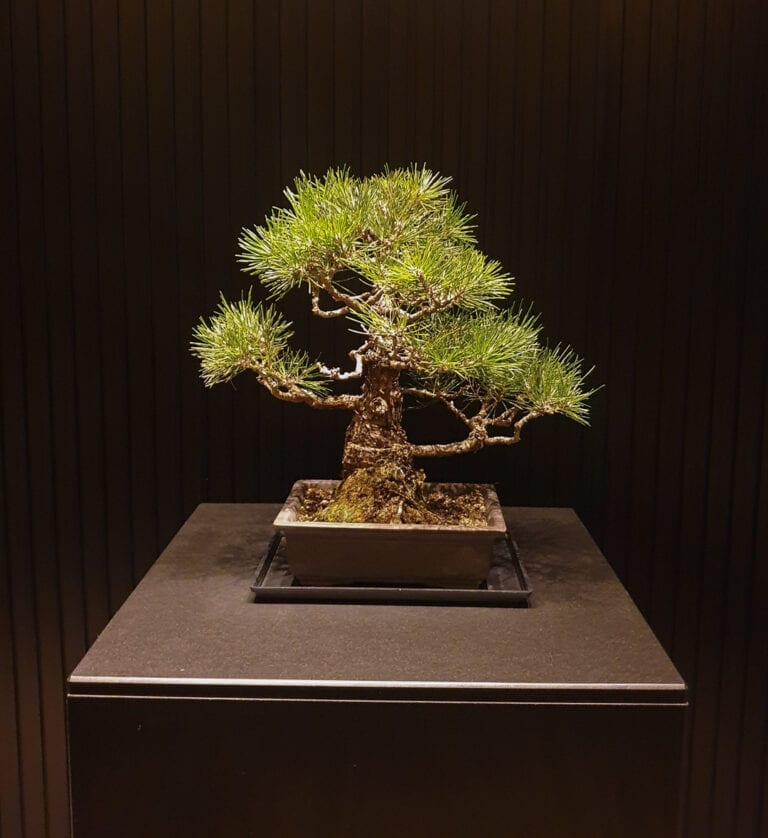 RC Kyoto 20 768x838 - REVIEW - Ritz Carlton Kyoto : Deluxe Garden King