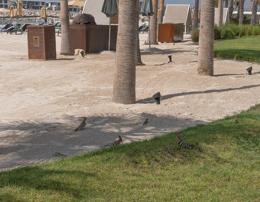 FS Jumeirah 33 880x685 - REVIEW - Four Seasons Dubai at Jumeirah Beach : Deluxe City-View Room [COVID-era]
