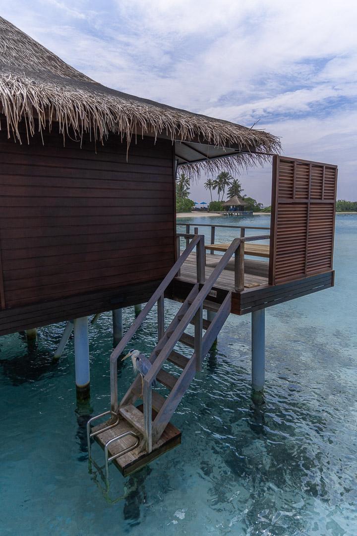 anantara veli 15 - REVIEW - Anantara Veli : Deluxe Over Water Pool Bungalow