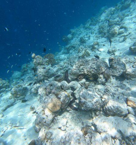 finolhu 169 450x480 - REVIEW - Finolhu : Ocean Pool Villa