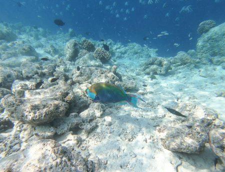 finolhu 170 450x345 - REVIEW - Finolhu : Ocean Pool Villa