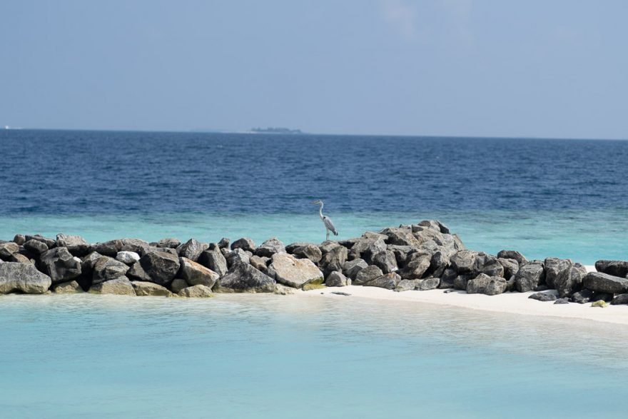 waldorf astoria maldives public spaces 1 880x587 - REVIEW - Waldorf Astoria Maldives Ithaafushi : King Reef Villa & King Ocean Villa
