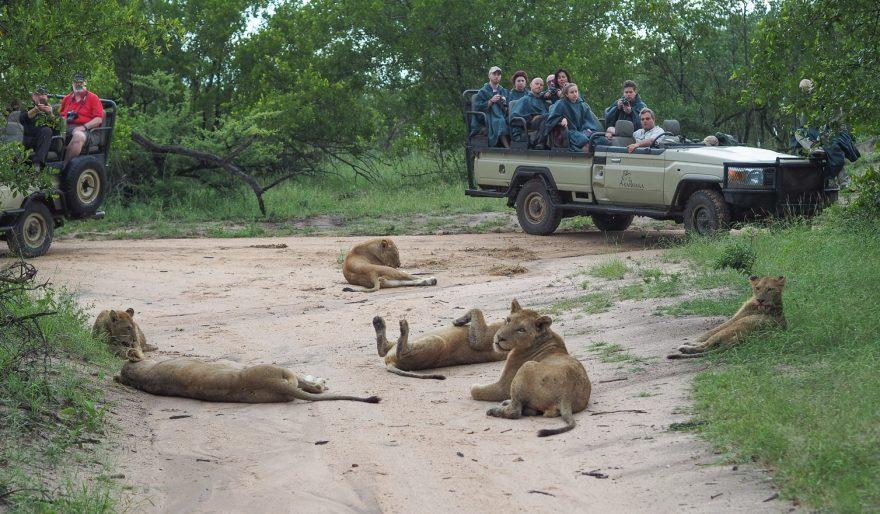 silvan 112 880x514 - REVIEW - Silvan Safari (Sabi Sands, SA)