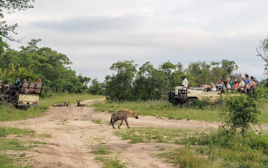 silvan 117 880x553 - REVIEW - Silvan Safari (Sabi Sands, SA)