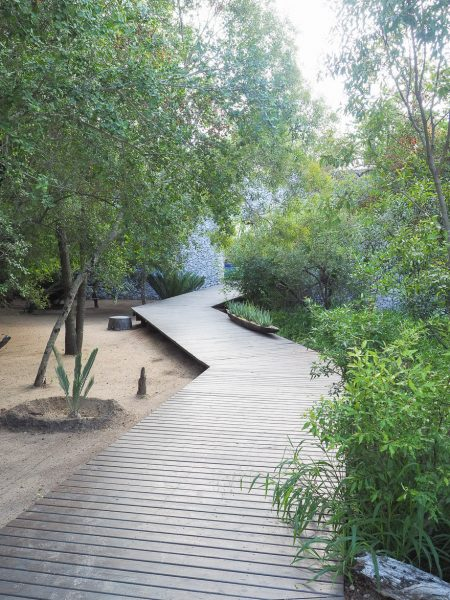 silvan 136 450x600 - REVIEW - Silvan Safari (Sabi Sands, SA)