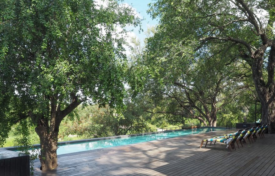 silvan 167 880x563 - REVIEW - Silvan Safari (Sabi Sands, SA)