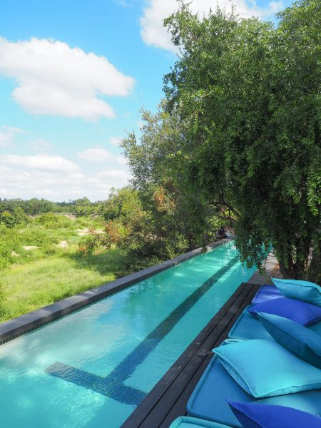 silvan 17 450x600 - REVIEW - Silvan Safari (Sabi Sands, SA)