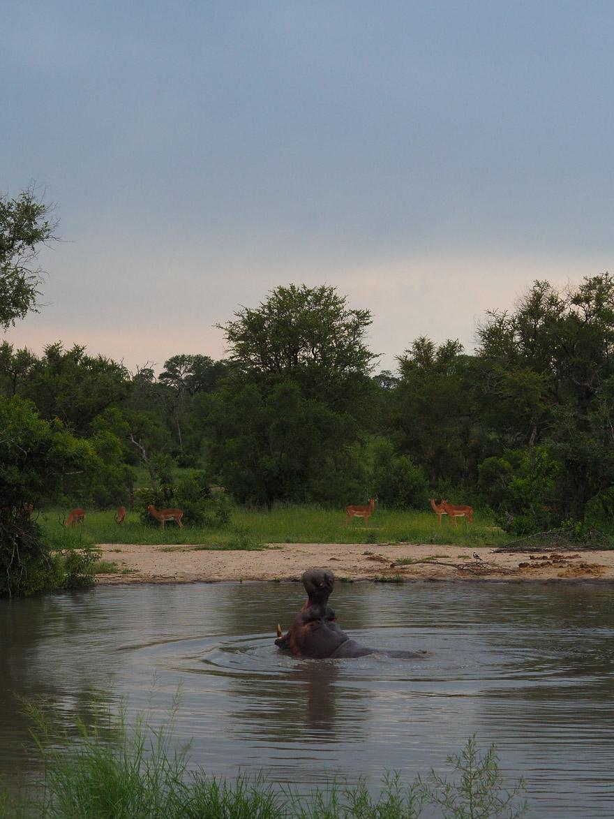 silvan 185 - REVIEW - Silvan Safari (Sabi Sands, SA)