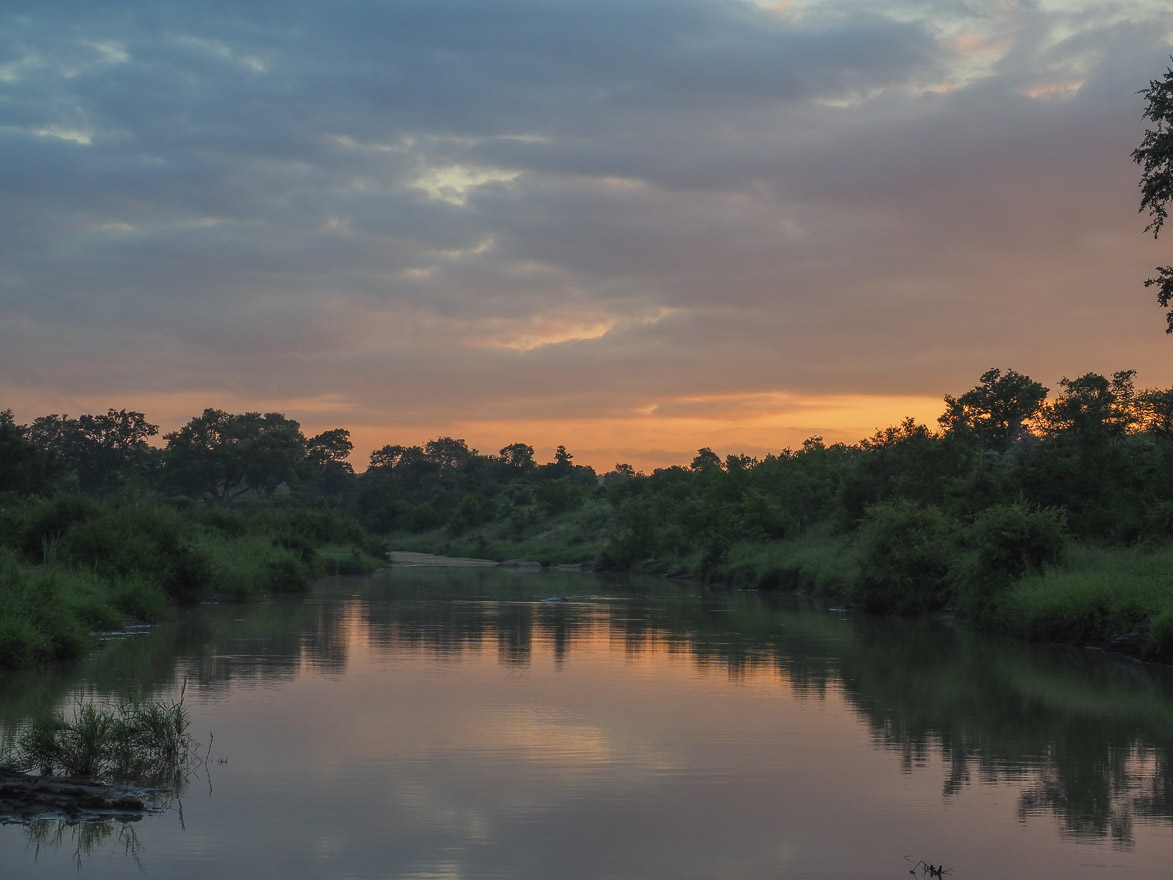 silvan 187 - REVIEW - Silvan Safari (Sabi Sands, SA)