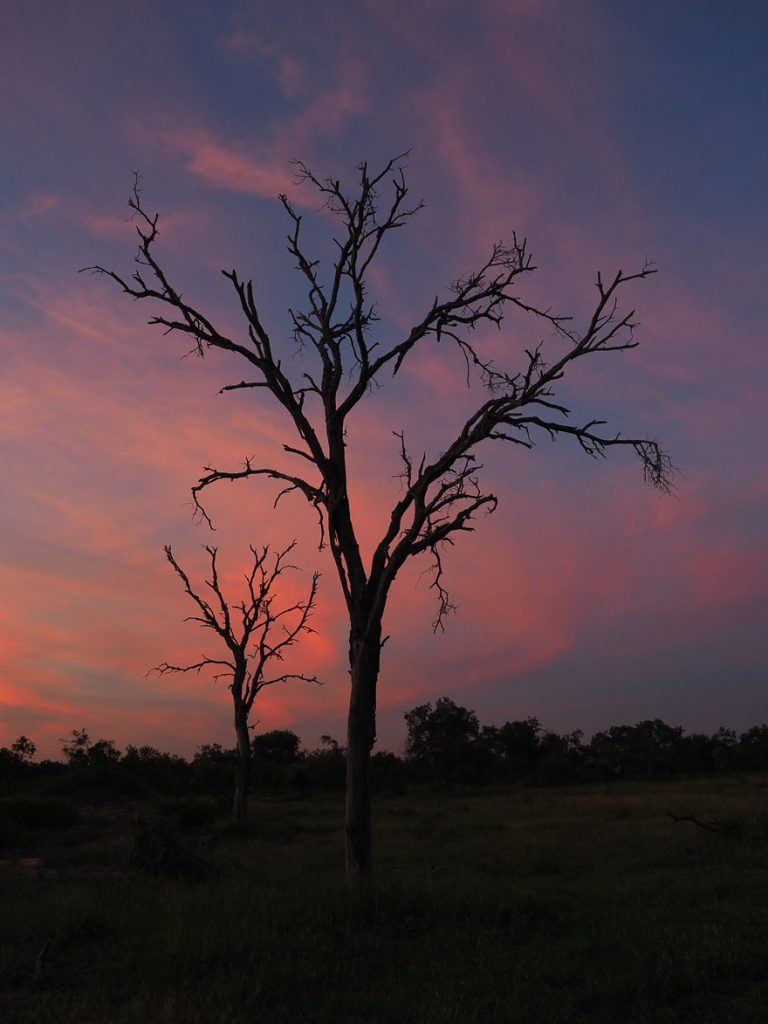 silvan 192 768x1024 - REVIEW - Silvan Safari (Sabi Sands, SA)