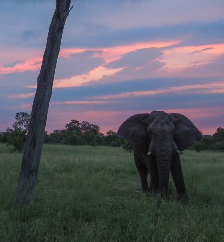 silvan 196 450x487 - REVIEW - Silvan Safari (Sabi Sands, SA)