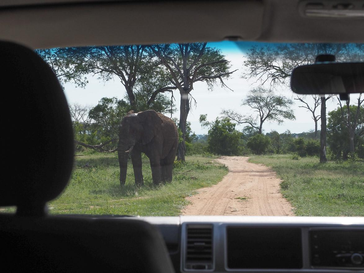 silvan 2 - REVIEW - Silvan Safari (Sabi Sands, SA)
