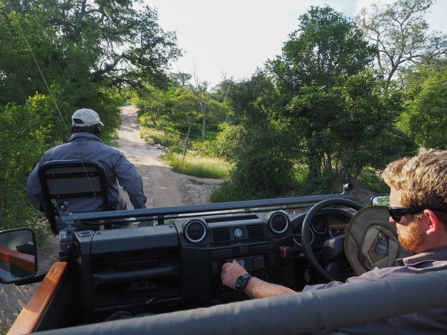 silvan 90 880x660 - REVIEW - Silvan Safari (Sabi Sands, SA)
