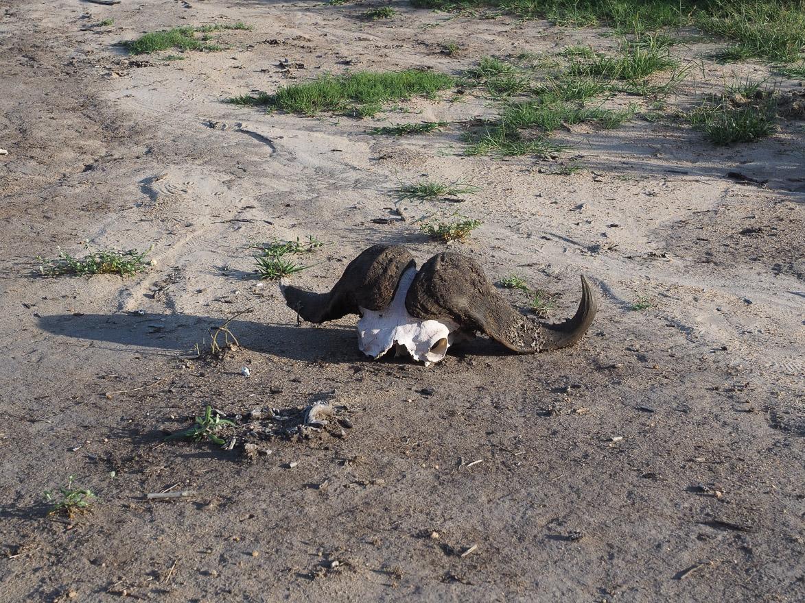 silvan 93 - REVIEW - Silvan Safari (Sabi Sands, SA)