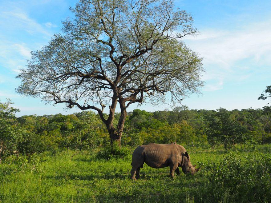 silvan 94 880x660 - REVIEW - Silvan Safari (Sabi Sands, SA)