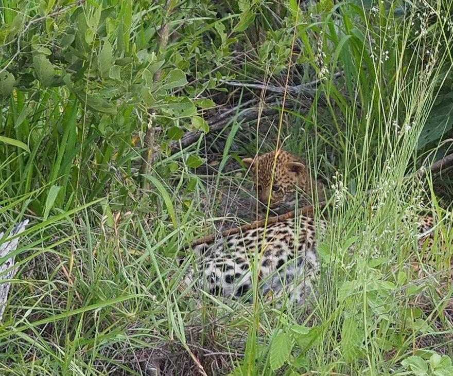 silvan 99 e1620637433792 - REVIEW - Silvan Safari (Sabi Sands, SA)