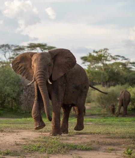 Matetsi 157 450x525 - REVIEW - Matetsi Victoria Falls (Zimbabwe)