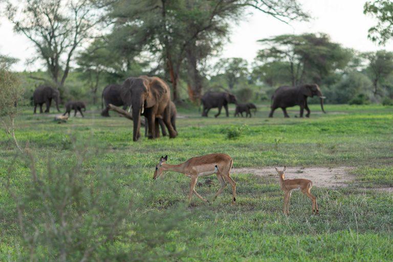 Matetsi 161 768x512 - REVIEW - Matetsi Victoria Falls (Zimbabwe)