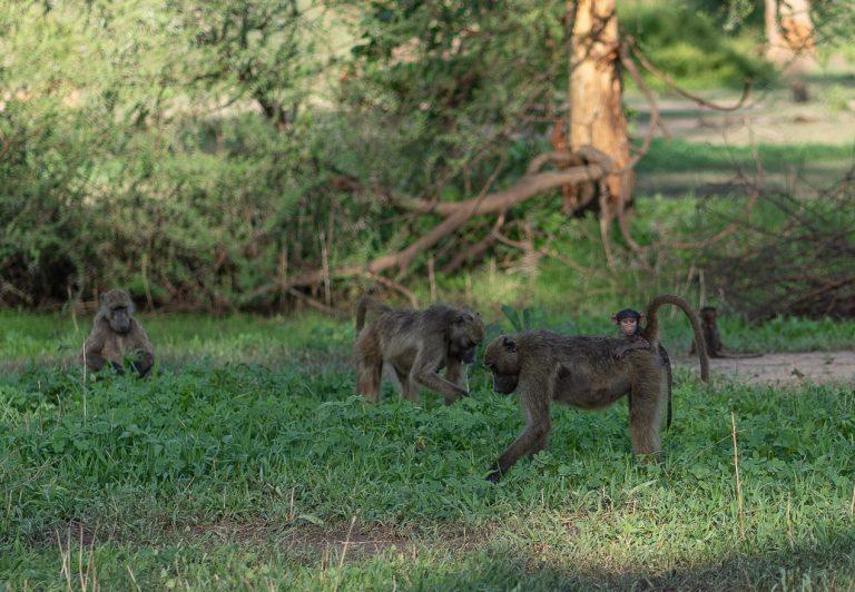 Matetsi 162 768x532 - REVIEW - Matetsi Victoria Falls (Zimbabwe)