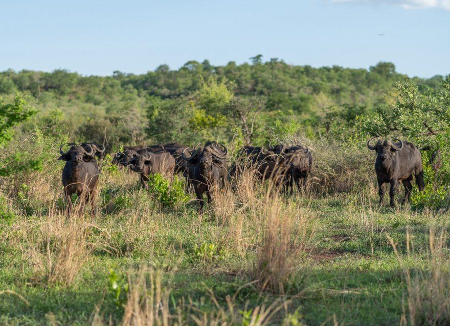 Matetsi 163 880x639 - REVIEW - Matetsi Victoria Falls (Zimbabwe)