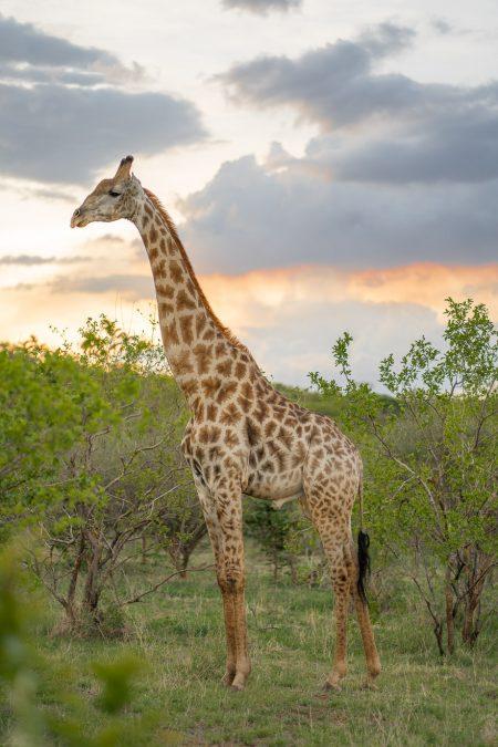 Matetsi 167 450x675 - REVIEW - Matetsi Victoria Falls (Zimbabwe)