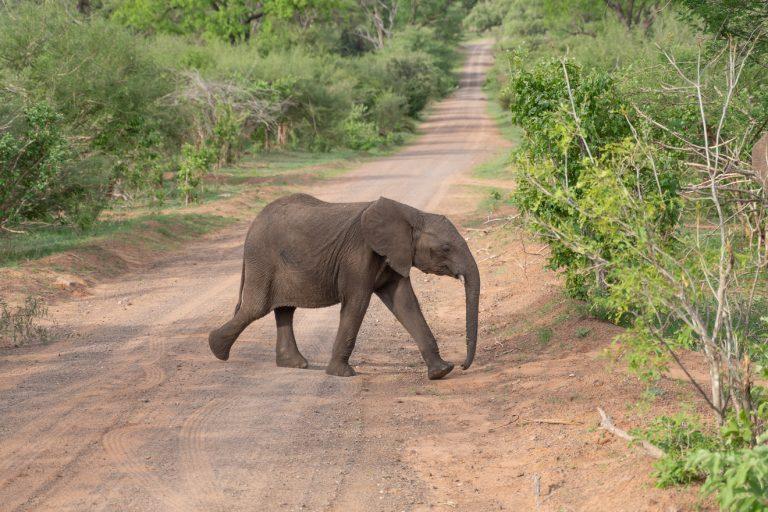 Matetsi 69 e1629653999121 768x512 - REVIEW - Matetsi Victoria Falls (Zimbabwe)