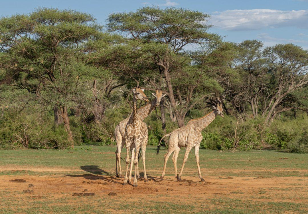 Matetsi 72 1080x750 - REVIEW - Matetsi Victoria Falls (Zimbabwe)