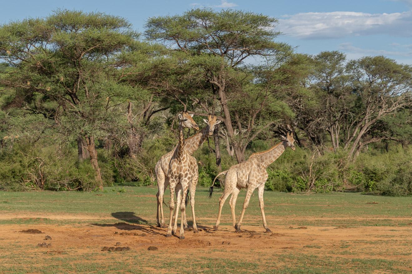 Matetsi 72 - REVIEW - Matetsi Victoria Falls (Zimbabwe)