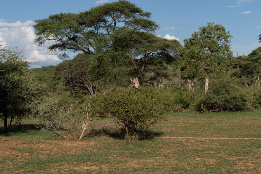 Matetsi 73 880x587 - REVIEW - Matetsi Victoria Falls (Zimbabwe)