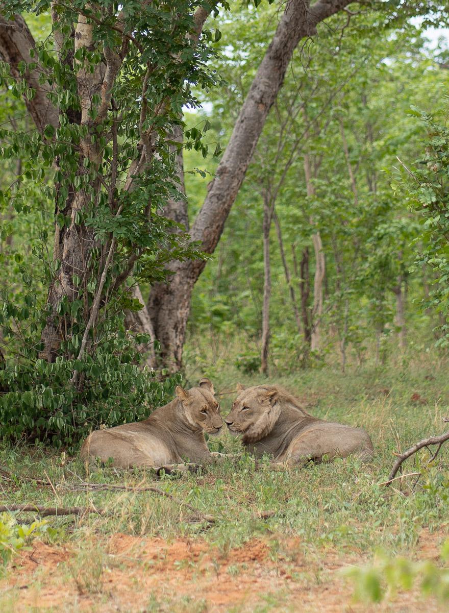 Matetsi 83 - REVIEW - Matetsi Victoria Falls (Zimbabwe)