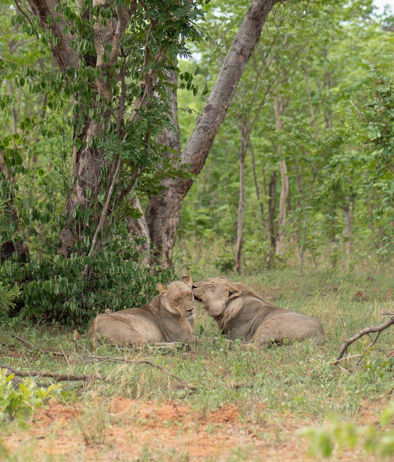 Matetsi 84 768x901 - REVIEW - Matetsi Victoria Falls (Zimbabwe)